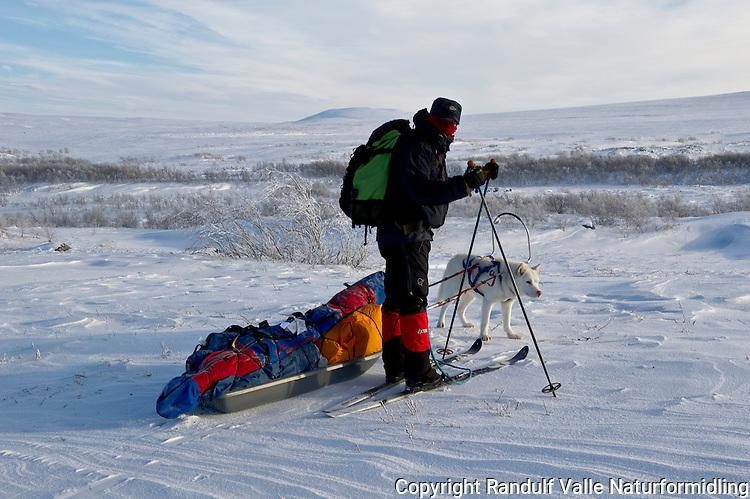 Mann og grønlandshund ved Nordre Stabbursdalsvann i Finnmark. ----- Man and greenland dog.