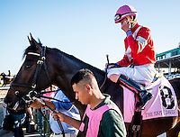 OLDSMAR, FLORIDA - FEBRUARY 11: McCracken #8, ridden by Brian Joseph Hernandez (pink hat), exits the paddock area prior to the Sam F. Davis Stakes at Tampa Bay Downs on February 11, 2017 in Oldsmar, Florida (photo by Douglas DeFelice/Eclipse Sportswire/Getty Images)