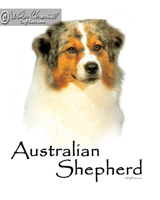 Australian Shepherd This design is offered on gift merchandise ONLY.<br />