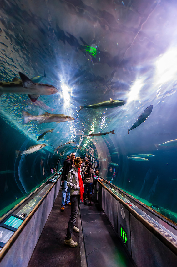 Sharks Aquarium Of The Bay Fisherman 39 S Wharf San