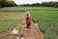 "Shardaben walks along the trench in the agricultural land that she leased for 5 years with the money she got from surrogacy...Shardaben Kantiben, 31; Husband is Kantibhai Motibhai (37).3 children --- 2 girls -  Usha(15) and Lakshmi (18, in pink); 1 boy, Chintan (17).- Education costs for all three come to Rs. 15,000 per year.- Shardaben was a two-time surrogate. First time she gave birth to twin girls for a Taiwanese couple and the second time a boy for an Indian couple from America (photo on TV set because she's proud that it was a boy).- The second time she became emotional and they got a gold ring of Rs. 1,500 made for the boy, which they presented to the biological parents. They are not in touch with either couple..- From the two surrogacies, they earned a little over 700,000rupees..-200,000rupees will be given as dowry for Lakshmi's wedding..- They leased agricultural land (Rs. 2 lakhs for five years) which earns them Rs. 60,000-70,000 a year; they bought two buffaloes worth Rs. 60,000 and make almost 6000-7000 per month selling milk; they bought a motorbike for Rs. 25,000; they put some money into house repairs and the construction of toilets, and opened a fixed deposit in Shardaben's name for Rs. 1.5 lakh and one in the name of their son, Chintan, for Rs. 25,000..Quotes..""Everyone says they'll keep in touch and take down addresses and phone numbers but nobody looks back. And I guess it works well. Our main interest was in the money. Their main interest is in the baby."" - KantiBhai.""Their rules apply at the surrogate house. It does curtail the freedom. When I used to go, everybody would just be lying. They count the days when they can go back."" - Kantibhai.""Ours is natural birth but surrogacy is a man-made pregnancy. There's a lot of risk. She must have taken at least 300 injections."" - Kantibhai of his wife...The Akanksha Infertility Clinic is known internationally for its surrogacy program and currently has over a hundred surrogate mothers pregnant in their"