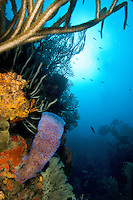 Azure Vase Sponge<br /> Reef Scenic<br /> Boulders<br /> Grenadines
