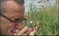 BNPS.co.uk (01202) 558833<br /> Picture: Peter Willows<br /> <br /> Expert in vascular plants Dr Tim Rich from the National Museum of Wales, identifies the wild asparagus on Portland Bill<br /> <br /> Botanists are hailing the success a painstaking project to save the loneliest plant in Britain from dying out after they mated it with a partner from 175 miles away. A rare single female wild asparagus plant, which can only reproduce sexually, was found leading a solitary existence on the Isle of Portland in Dorset in 1997 and experts pollinated the plant with a male variety from Cornwall. The female plant produced 60 seeds which were carefully propagated in a greenhouse and then planted back on Portland bill. Out of the original plants, 51 are thriving today and 11 of them - seven males and four females - have now flowered for the first time.