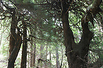 woods in Big Sur