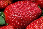 Freshly picked organic strawberry