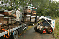 Loading the hives for the transhumance takes place at dusk. <br /> Beekeepers also prefer rainy days because the bees remain in their hives.