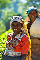 Tea pickers in the clear highland air of Sri Lanka. (Photo by Matt Considine - Images of Asia Collection)