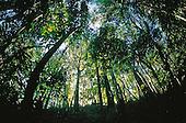 forêt du Mont Koghis
