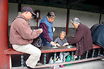 Asia, China, Beijing. Chinese folks gathered for a card game in Taintan, Temple of Heaven Park.