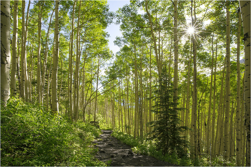 On my return from an early morning hike to Crater Lake, I paused for a moment in one of the many aspen groves in the Maroon Bells Wilderness area. The sunlight was streaming through the lush green canopy, making for a perfect location to capture one of my favorite sort of images in Colorado - sunshine in aspen. <br />