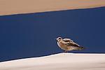 Seagull perched on top of a beach canopy, Cabo San Lucas, Baja California, Mexico