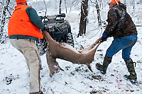 Donovan Nokes, left, and Mike Johnson load a young buck killed by Nokes onto a four-wheeler on Sunday, December 4, 2011 in Webster City, IA.