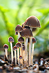 Wild Plants & Fungi Photos