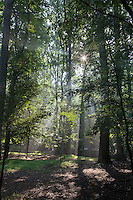The morning sun shines through a lush wooded area in Maryland.