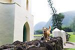 St. Philomena Church - Father Damien's Church in the Kalawao area of Kalaupapa Peninsula.  The guided tour at the historic site of Kalaupapa on the island of Molokai, Hawaii, USA