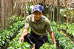 Portrait of Guatemalan man with his shaded coffee plants in San Juan La Laguna, Lake Atitlan, Guatemala