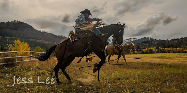 Image result for COWBOYS FROM MONTANA