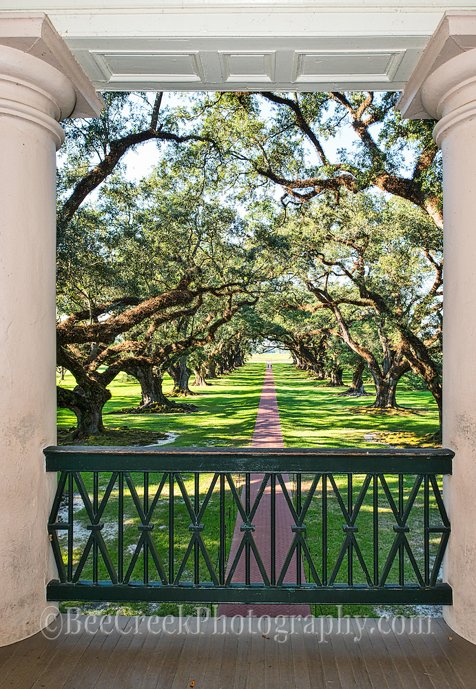This is the view from the mansion balcony that the owners would see every day from the second floor.  This is the path that leads through the live oaks toward the Mississippi river on the other side of the levie.