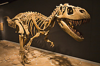 Mesalands Dinosaur Museum - Tucumcari, NM photos