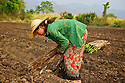 Fascines are planted by hand. The average pay in Burma for a farmer is around a dollar a day, among the lowest in the world.