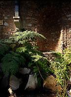 Plant History Glasshouse (formerly Australian Glasshouse), 1830s, Rohault de Fleury, Jardin des Plantes, Museum National d'Histoire Naturelle, Paris, France. Low angle view of cyatheales plants in a quiet corner lit by the afternoon light.