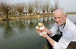 Foto: VidiPhoto<br /> <br /> COTHEN - Het paasei van Columbus, volgens Arjan Smit van proeverij De Pronckheer in Cothen. De restauranthouder zoekt dinsdag langs de sloten in de provincie Utrecht naar ganzeneieren om ze te verwerken tot gansvocaat, advocaat van ganzeneieren. Op dit moment worden door heel Nederland ganzeneieren geschud of lekgeprikt, om te voorkomen dat de ganzenplaag voor agrarisch Nederland nog grotere vormen aanneemt. Volgens Smit is dat waanzin en het vernietigen van kostbaar en duurzaam voedsel. Ganzeneieren zijn namelijk supergezond, zeer smaakvol en ze zitten vol vitaminen en anti-oxidanten. Ze zijn daarmee veel gezonder dan een kippenei. &quot;Dit is het beste scharrelei dat er bestaat.&quot; Smit roept het Nederlandse publiek op zijn voorbeeld te volgen. &quot;Je helpt zo een plaag bestrijden en je haalt gratis vitaminerijk voedsel in huis. Door ganzeneieren te eten hoeft er volgend jaar minder op ganzen gejaagd te worden.&quot; De ganzeneieren komen op het menu van De Pronckheer te staan als gansvocaat en als omelet. Of het wettelijk allemaal is toegestaan wat Smit doet interesseert hem niet. &quot;Er is een ganzenplaag. Dit moet gebeuren.&quot;