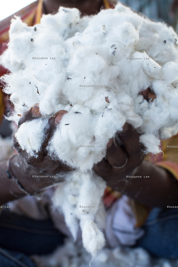 A loading labourer holds a handful of raw Fairtrade cotton after unloading it from a truck at a ginning factory that is contracted by Pratibha in Karhi, Khargone, Madhya Pradesh, India on 12 November 2014. Photo by Suzanne Lee for Fairtrade