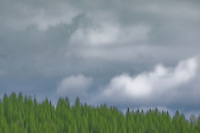 Gray clouds over a green forest. It's all an illusion.