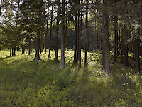 FOREST_LOCATION_90002
