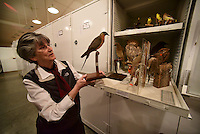 Northwest Arkansas Democrat Gazette/SPENCER TIREY Nancy McCartney curator of zoology at the Univserity of Arkansas shows shows some of the bird collection in the Univserity of Arkansas archeology departments archive in Fayetteville Friday February 26, 2016.