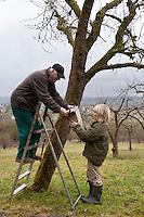 Nistkasten, Großvater, Opa und Enkelkind, Kind hängen Vogel-Nistkasten für Halbhöhlenbrüter in einem Obstbaum auf, Garten