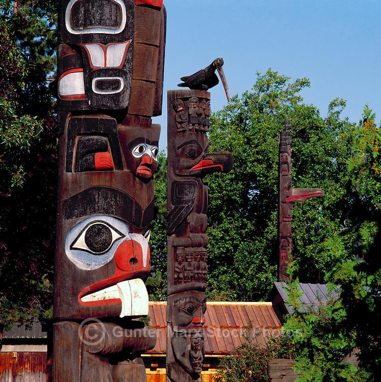 Totem Poles in Thunderbird Park, Victoria, BC, British Columbia, Canada.  Haida Totem Pole (left), Gitxsan (Gitksan) Totem Pole (centre), and Haida Totem Pole (right).
