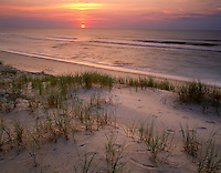 Cape Hatteras National Seashore, NC<br /> Sunrise over the calm Atlantic from Hatteras Island with beach grasses and barrier dunes on north Carolina's Outer Banks