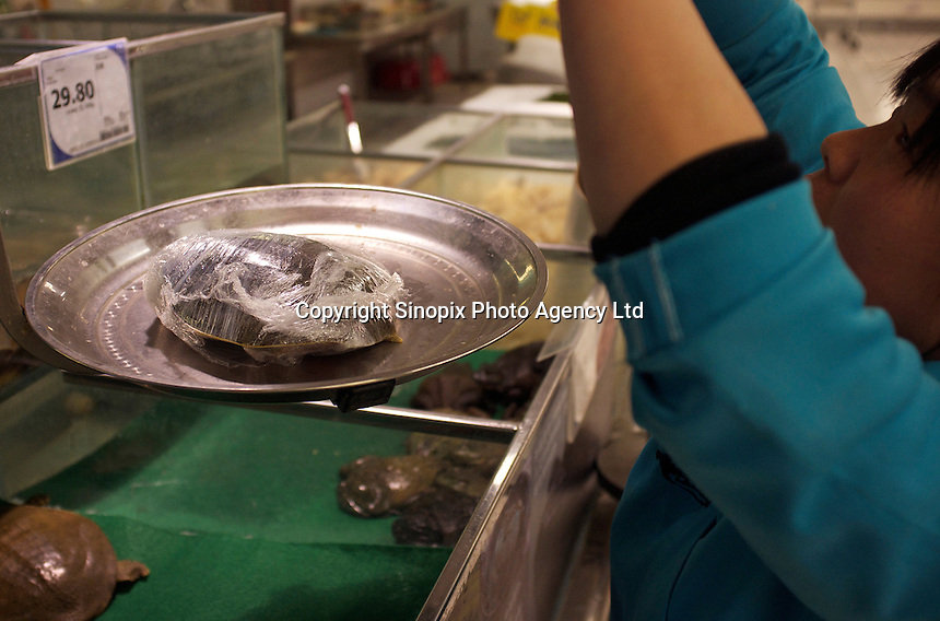 Turtles for sale in Tesco are wrapped in cling-film, in the Fengtai area of Beijing.  Live turtles are sold and often killed on the premises of the shop.  The turtles cost 48 RMB (4.88 UK pounds) for a kilo. The turtle in the basket cost 163 RMB (16.59 UK pounds).<br /> <br /> Photo by Sinopix