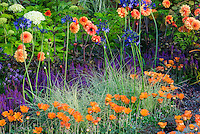 Dahlias, Hydrangea, Carex ornamental grass, Arctotis flowers, Salvia, Agapanthus for an orange and blue purple themed garden