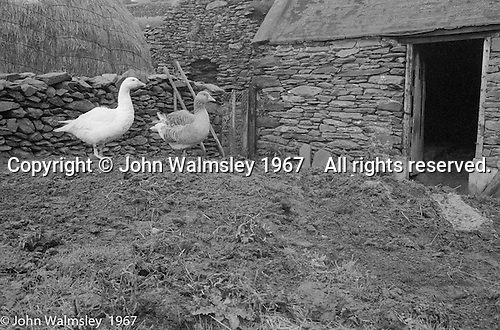 "Largely a farming community, Dunquin (in Gaelic, Dún Chaoin, meaning ""Caon's stronghold""), on the tip of the Dingle Peninsula, County Kerry, Ireland.  1971."