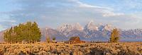 Mormon row during autumn in Grand Teton National Park