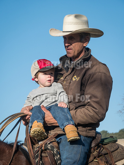 Cattle branding, doctoring, marking at the 110 Ranch, Amador County, California with the Dell'Orto Ranch.<br /> <br /> Steve Wooster with grandson Waylon Dell'Orto