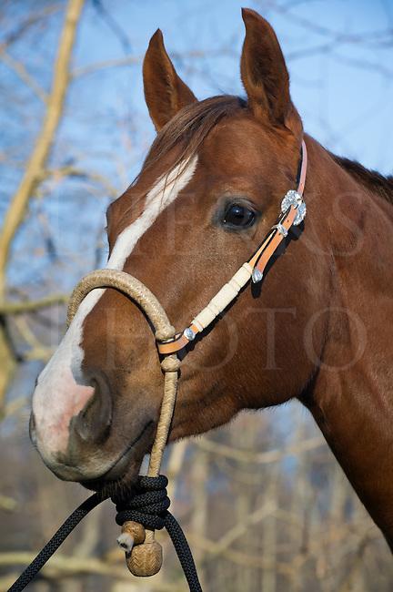 Horse Wearing New Bosal
