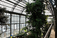 Plant History Glasshouse (formerly the Australian Glasshouse), 1830s, Charles Rohault de Fleury, Jardin des Plantes, Museum National d'Histoire Naturelle, Paris, France. View of a Podocarpus Elongata (SW Africa) from the first floor of the glasshouse.