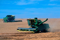 Combines harvesting wheat.