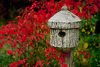 Birdhouse made of log with bark sits in fall garden sourrounded by foliage of &quot;burning bush&quot;, euonymous,  Midwest USA