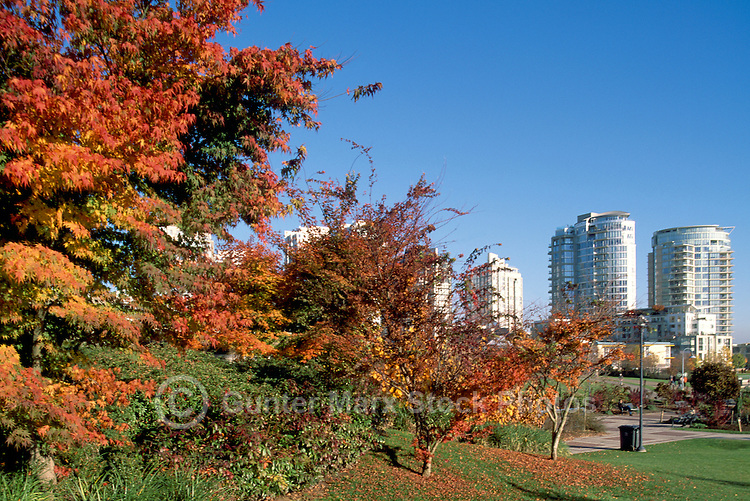 Vancouver, BC, British Columbia, Canada - High Rise Apartment and Condominium Buildings overlooking David Lam Park in Yaletown District, Downtown City, Autumn / Fall