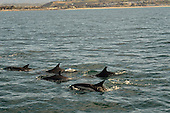 Stock photo of Dolphins