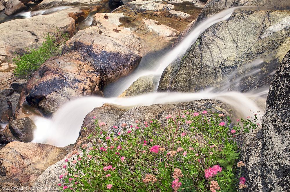 Squaw Creek in Summer