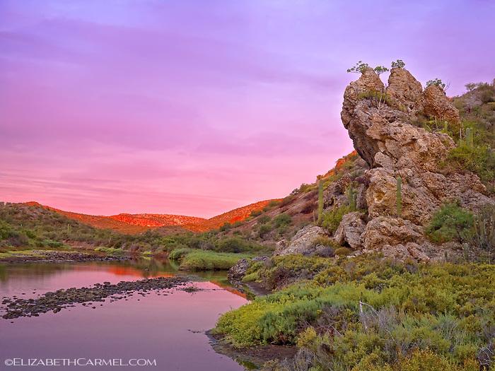 Desert Oasis, Baja