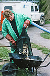 An environment agency workers net out  dead trout on the  River Kennet in one of Britain's worst ever incidents of river poisoning which killed more than three million fish.<br /> Scientists from the Agency say carryed out door-to-door enquiries at farms and businesses around the village of Little Bedwyn, Wiltshire, <br /> It is thought contaminants entered the river near the village and spread downriver to the Berkshire Trout Farm, near Hungerford, wiping out its entire stock of more than 150 tonnes of trout .<br /> The Environment Agency's area manager Stu Darby said: &quot;This is one of the largest incidents of its type in the region to date
