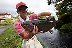 A staffer holds up a rainbow trout farmed at Kakishima Trout Farm in Fujinomiya, Shizuoka Prefecture Japan on 02 Oct. 2012.  Photographer: Robert Gilhooly