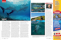 Images in Oslob whale shark reportage for german dive magazine Tauchen.