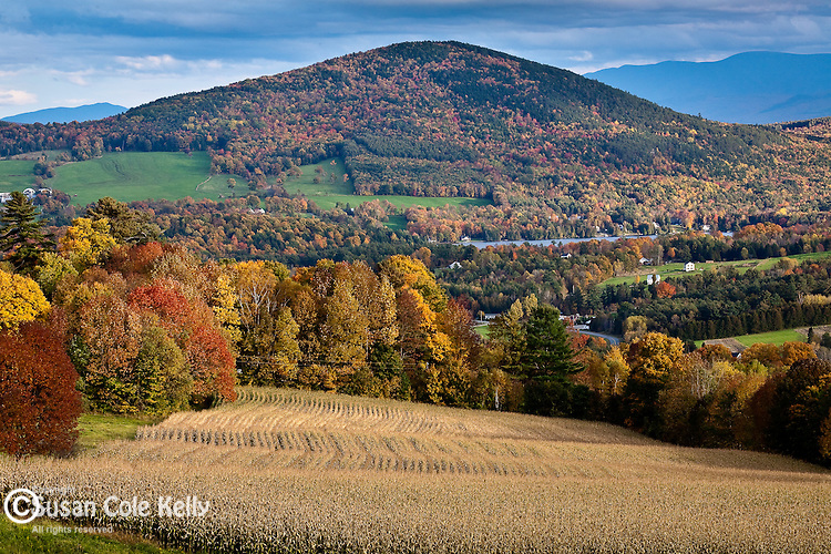 A cornfield ready for harvest and fall foliage on Harvey's Mountain in Peacham, Northeast Kingdom, VT, USA